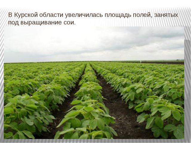 В Курской области увеличилась площадь полей, занятых под выращивание сои.