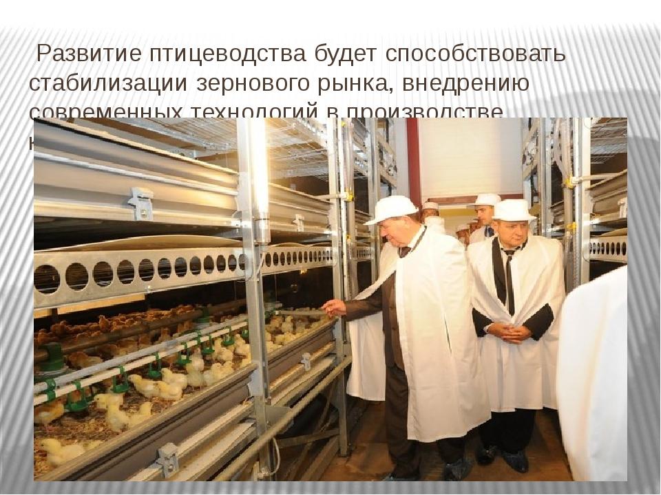 Развитие птицеводства будет способствовать стабилизации зернового рынка, вне...