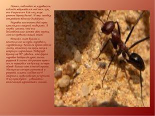 Летом, наблюдая за муравьями, я всегда задумывался над тем, как они в огромно