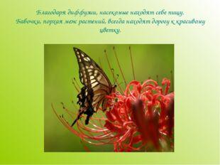 Благодаря диффузии, насекомые находят себе пищу. Бабочки, порхая меж растений