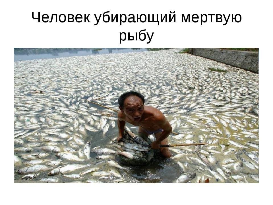 Человек убирающий мертвую рыбу