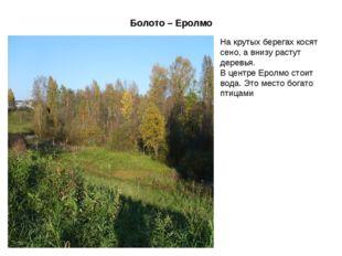 Болото – Еролмо На крутых берегах косят сено, а внизу растут деревья. В центр