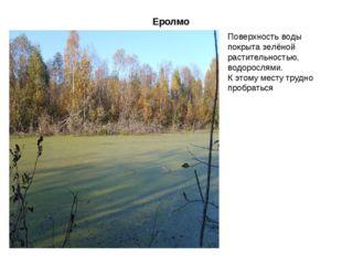 Еролмо Поверхность воды покрыта зелёной растительностью, водорослями. К этому