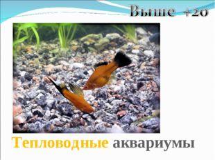 Тепловодные аквариумы