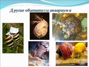 Другие обитатели аквариума