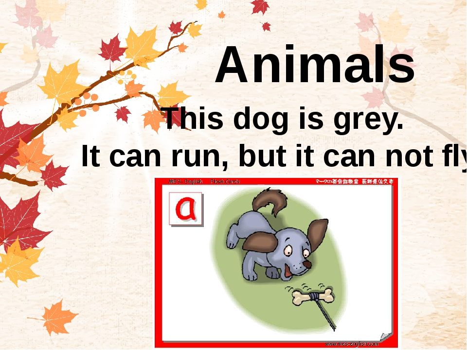 Animals This dog is grey. It can run, but it can not fly.