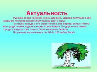 Актуальность  Русское слово «берёза» очень древнее. Дерево получило своё наз