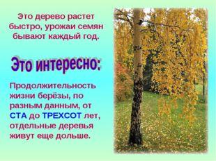 Это дерево растет быстро, урожаи семян бывают каждый год. Продолжительность ж