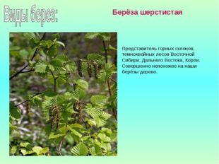 Представитель горных склонов, темнохвойных лесов Восточной Сибири, Дальнего В