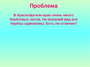 Проблема В Красноярском крае очень много берёзовых лесов. На внешний вид все