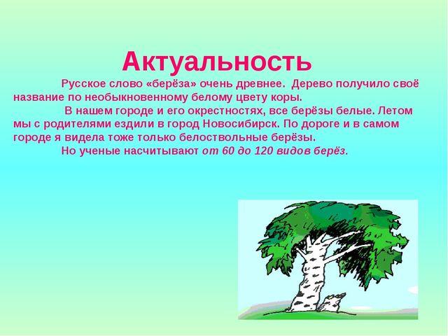 Актуальность  Русское слово «берёза» очень древнее. Дерево получило своё наз...