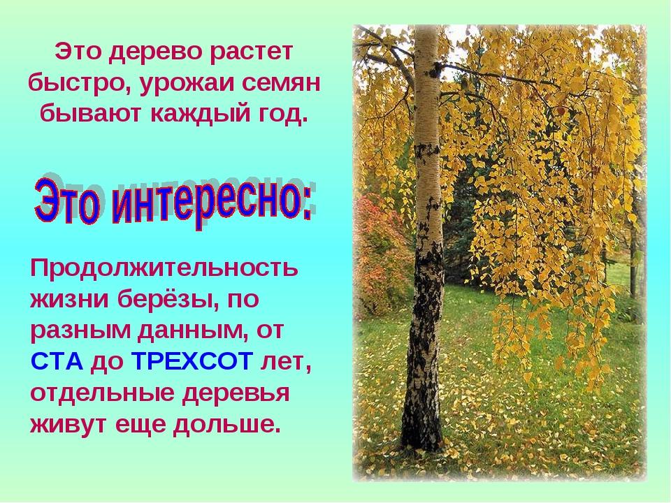 Это дерево растет быстро, урожаи семян бывают каждый год. Продолжительность ж...