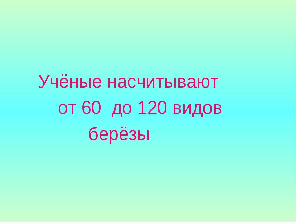 Учёные насчитывают от 60 до 120 видов берёзы