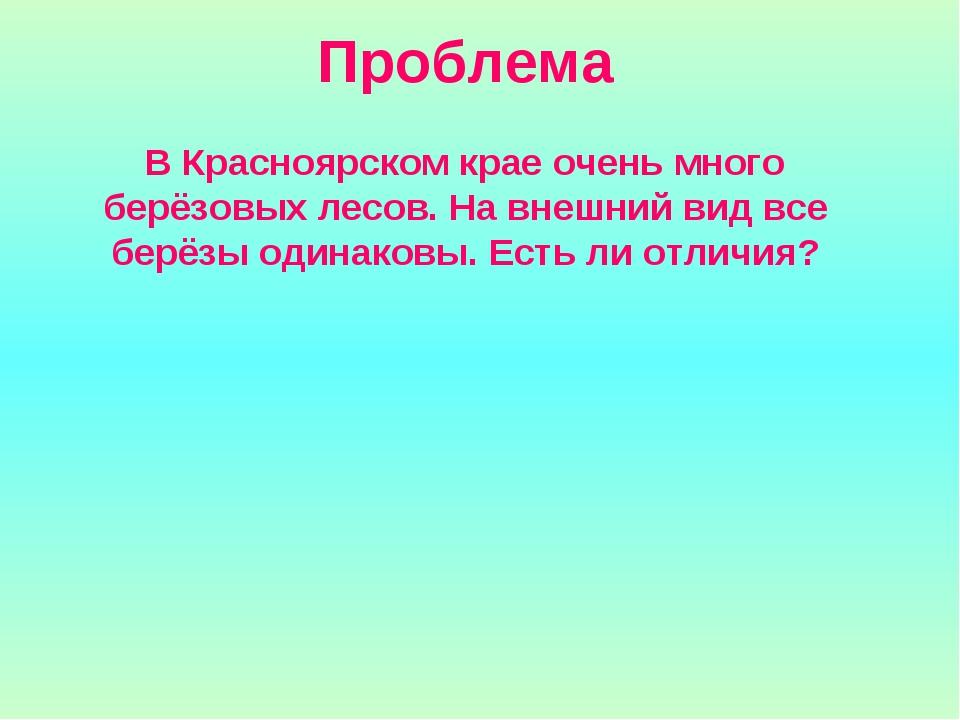 Проблема В Красноярском крае очень много берёзовых лесов. На внешний вид все...