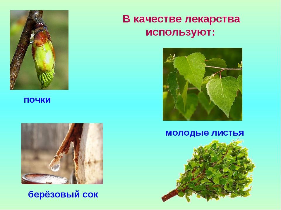 В качестве лекарства используют: молодые листья почки берёзовый сок