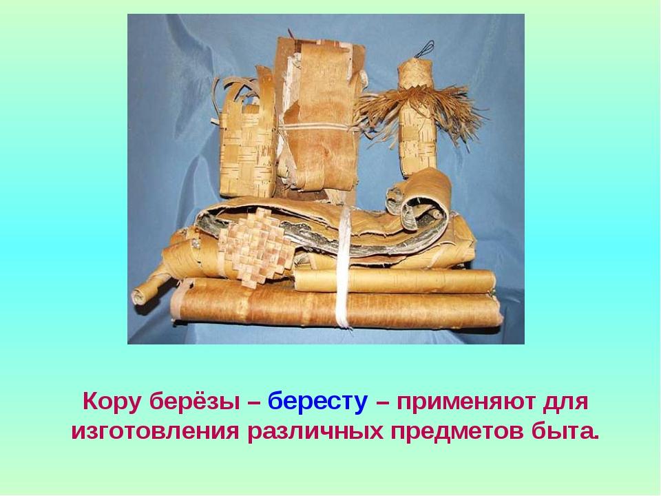 Кору берёзы – бересту – применяют для изготовления различных предметов быта.