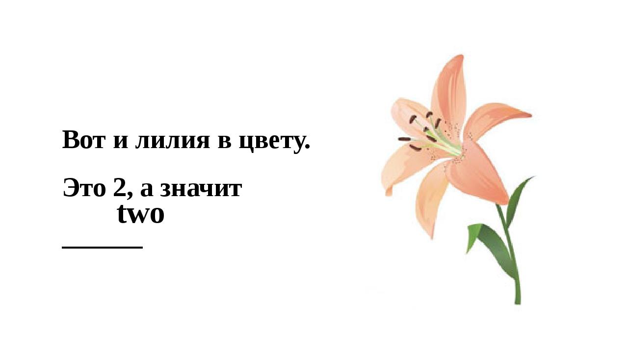 Вот и лилия в цвету. Это 2, а значит ______ two