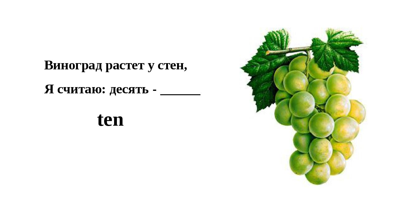 Виноград растет у стен, Я считаю: десять - ______ ten