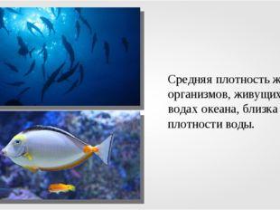 Средняя плотность живых организмов, живущих в водах океана, близка к плотност