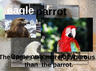 eagle parrot Орлы опаснее попугаев. The eagles are more dangerous, than the