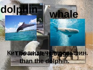 dolphin whale Кит больше чем дельфин. The whale is bigger than the dolphin.