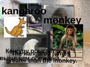 kangaroo monkey Кенгуру прыгает выше чем обезьяна. The kangaroo jumps greate
