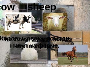 cow sheep Коровы, овцы, лошади живут на ферме. The cows, sheep, horses live