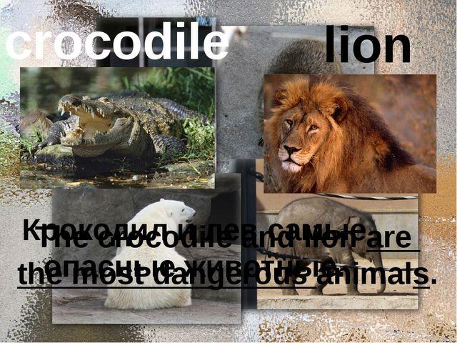 crocodile lion Крокодил и лев самые опасные животные. The crocodile and lion...