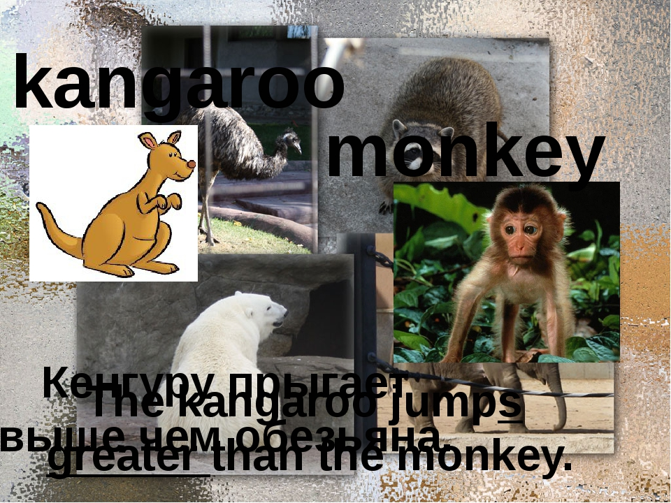 kangaroo monkey Кенгуру прыгает выше чем обезьяна. The kangaroo jumps greate...