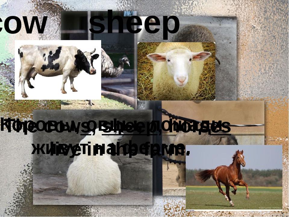 cow sheep Коровы, овцы, лошади живут на ферме. The cows, sheep, horses live...