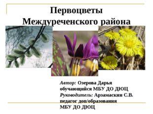 Первоцветы Междуреченского района Автор: Озерова Дарья обучающийся МБУ ДО ДЮЦ