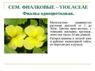 СЕМ. ФИАЛКОВЫЕ – YIOLACEAE Фиалка одноцветковая. Многолетнее травянистое раст