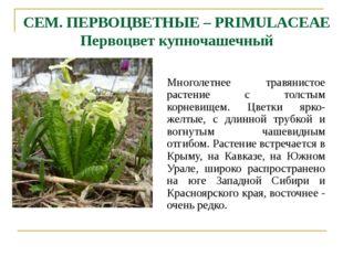 СЕМ. ПЕРВОЦВЕТНЫЕ – PRIMULACEAE Первоцвет купночашечный Многолетнее травянист