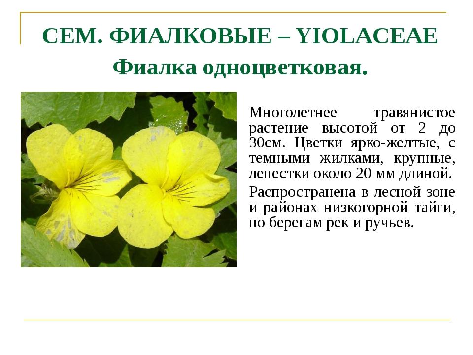 СЕМ. ФИАЛКОВЫЕ – YIOLACEAE Фиалка одноцветковая. Многолетнее травянистое раст...