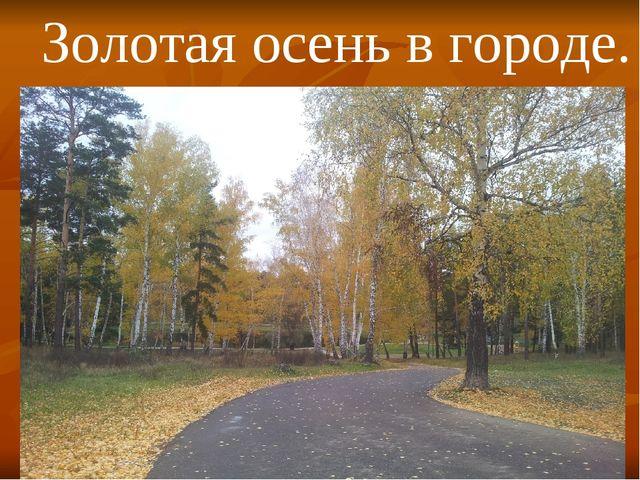 Золотая осень в городе.
