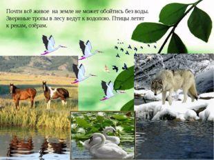 Почти всё живое на земле не может обойтись без воды. Звериные тропы в лесу ве