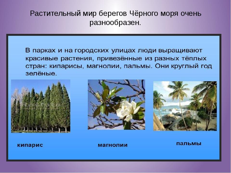 Растительный мир берегов Чёрного моря очень разнообразен.