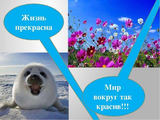 Жизнь прекрасна Мир вокруг так красив!!!