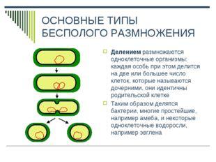 ОСНОВНЫЕ ТИПЫ БЕСПОЛОГО РАЗМНОЖЕНИЯ Делением размножаются одноклеточные орган