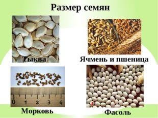 Тыква Ячмень и пшеница Морковь Фасоль Размер семян