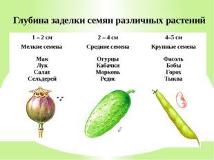 Глубина заделки семян различных растений 1 – 2 см 2 – 4 см 4–5 см Мелкие семе