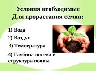 2) Воздух 1) Вода Условия необходимые Для прорастания семян: 3) Температура 4