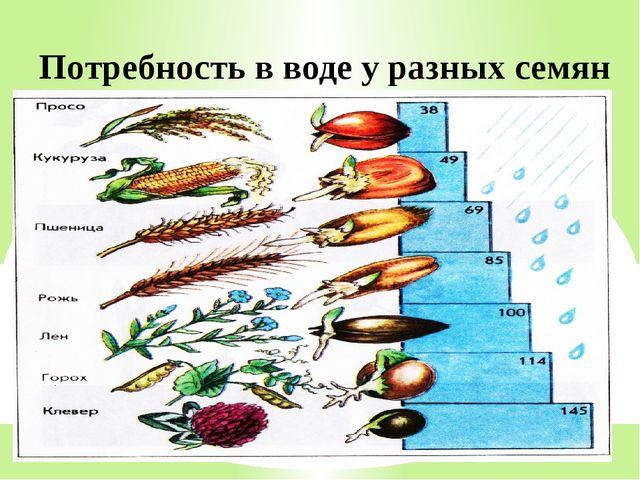 Потребность в воде у разных семян
