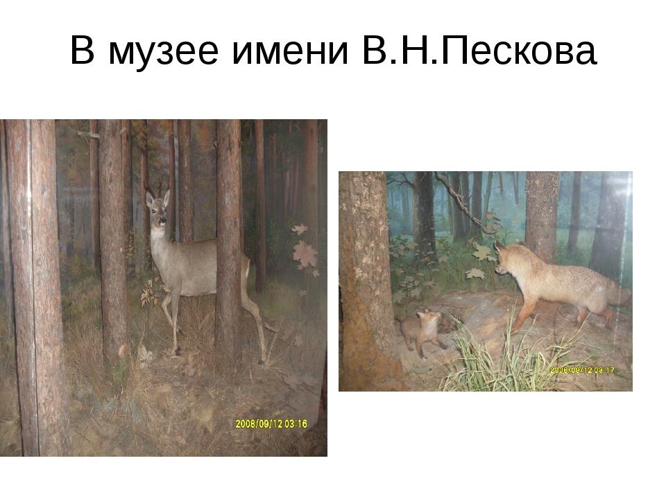 В музее имени В.Н.Пескова