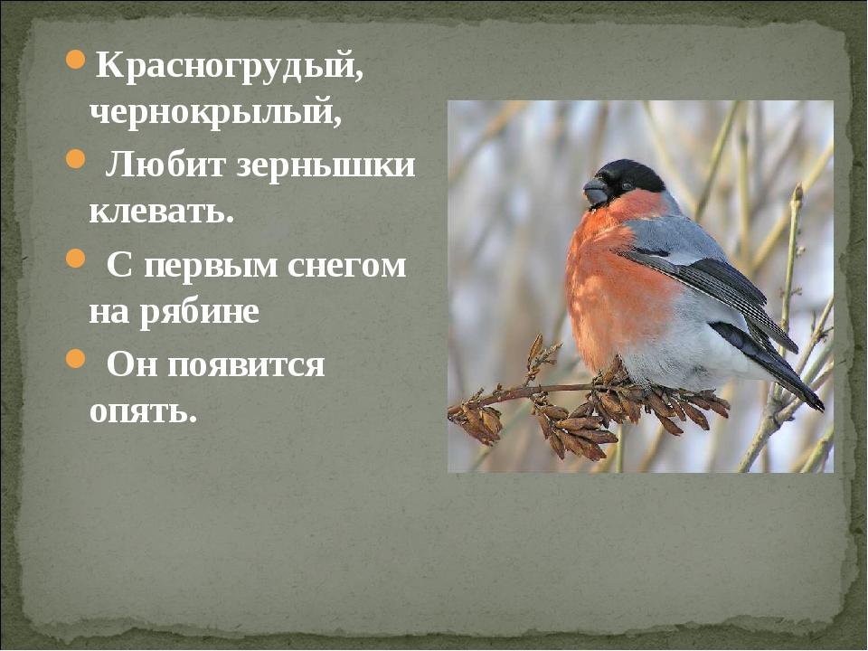 Красногрудый, чернокрылый, Любит зернышки клевать. С первым снегом на рябине...