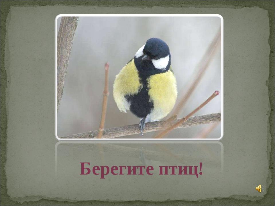 Берегите птиц!