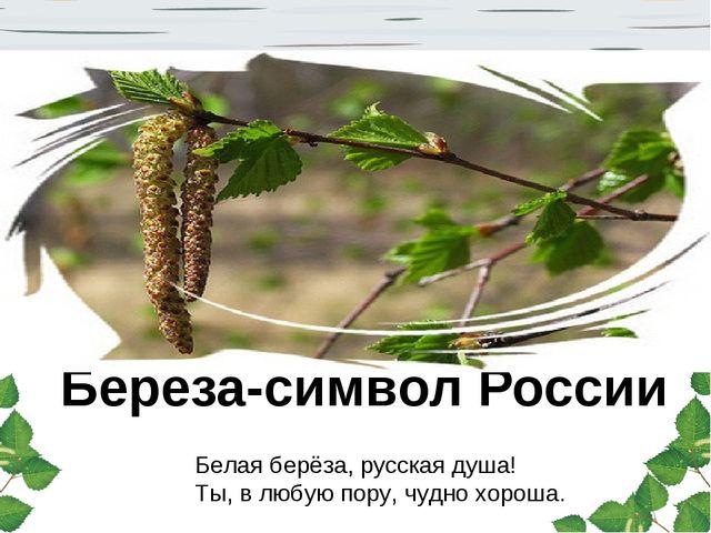 Береза-символ России Белая берёза, русская душа! Ты, в любую пору, чудно хоро...