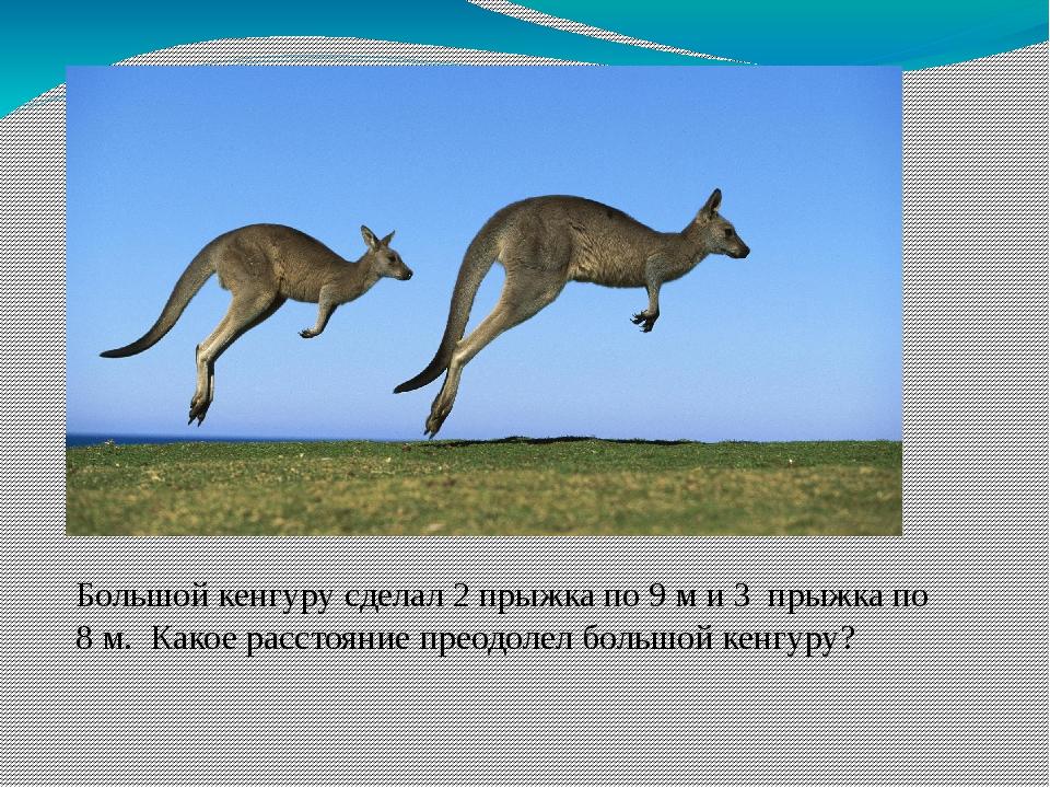 Большой кенгуру сделал 2 прыжка по 9 м и 3 прыжка по 8 м. Какое расстояние пр...
