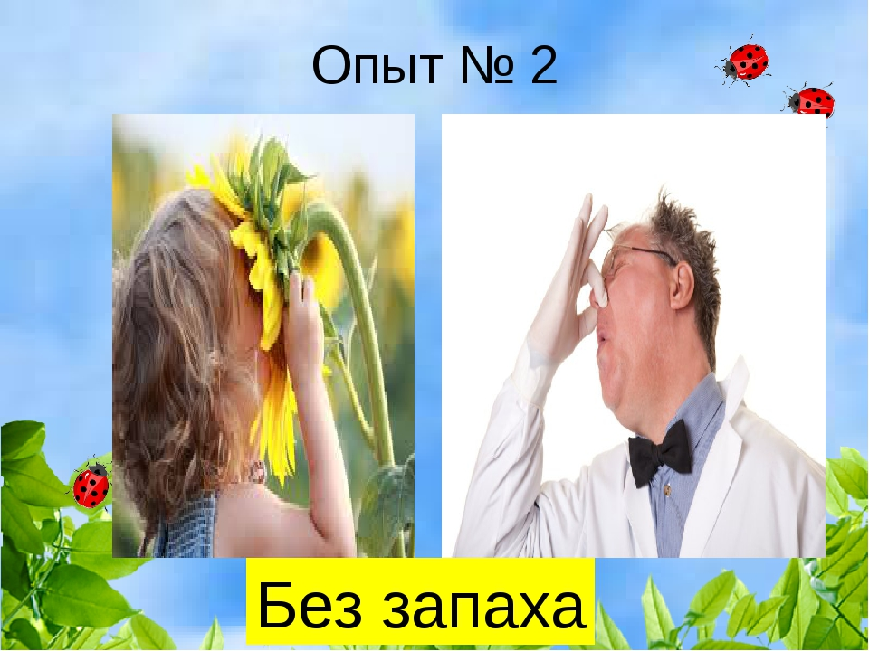 Опыт № 2 Без запаха