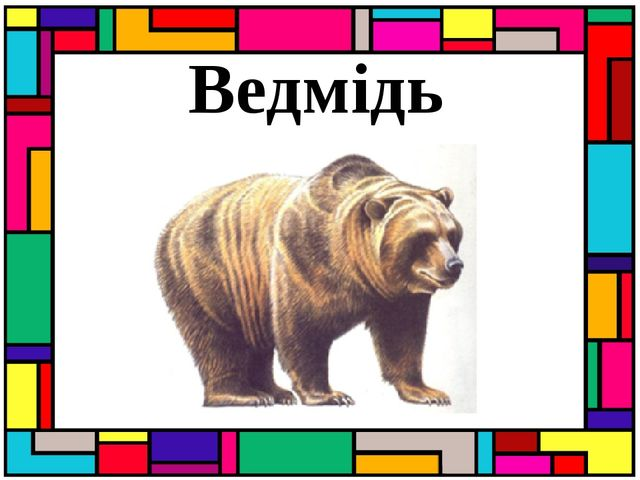 Ведмідь